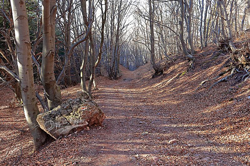По пътеките в Лозенска планина