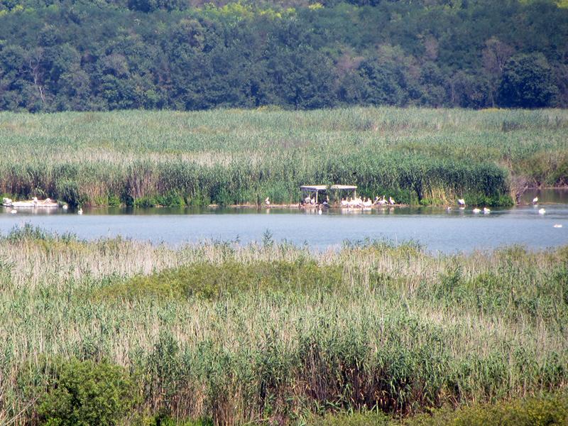 Сребърна: платформи-люпилня на пеликани