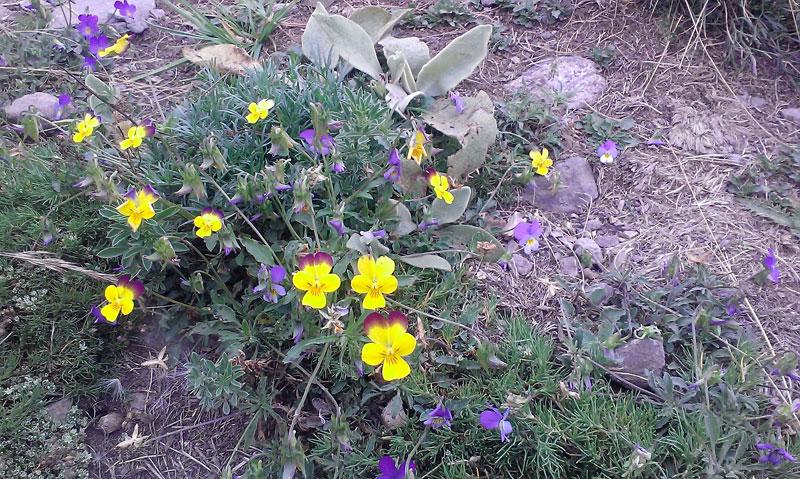 Красиви цветя по пътя към върха