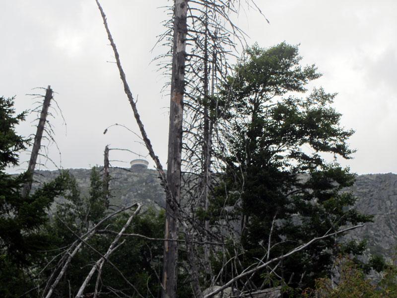 Резаерват Бистришко бранище - много дървета са покосени от смерч