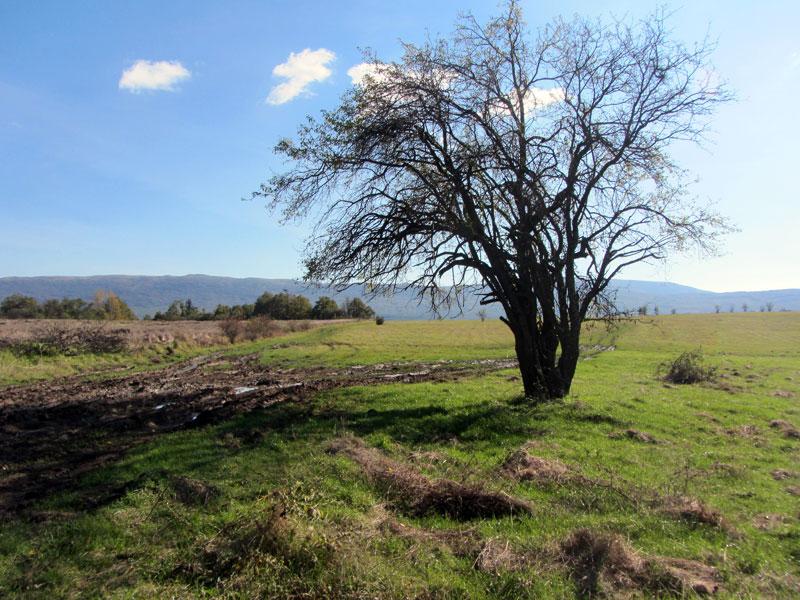 Дървото-ориентир: след него се поема вдясно