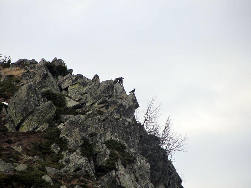 Орлово гнездо на Витоша