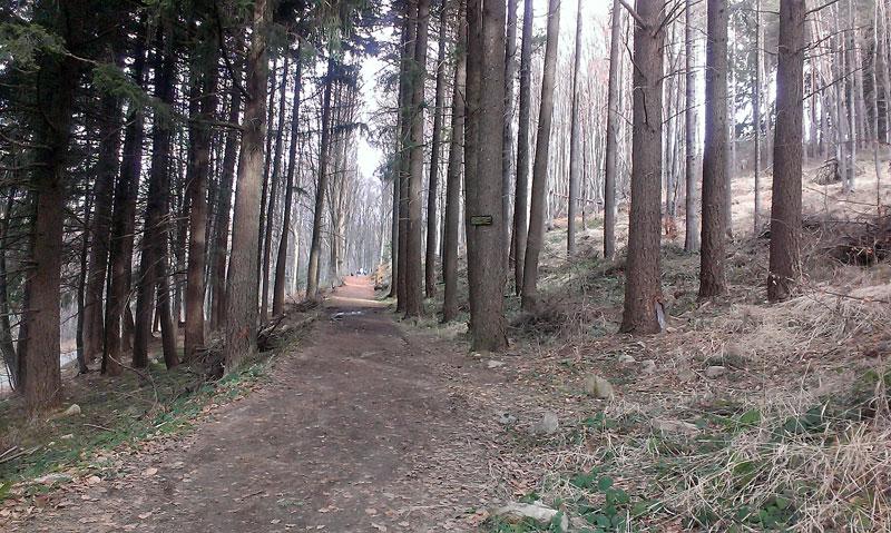 От Златните мостове до Копитото на Витоша - по алеята