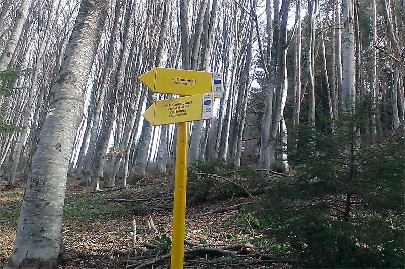 От Златните мостове до Копитото на Витоша - разклонението за хижа Планинец и Копитото