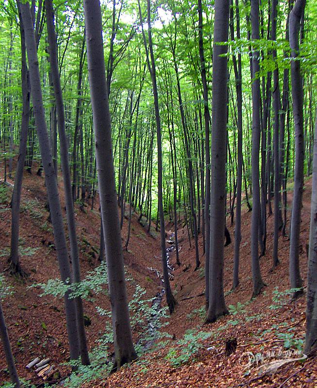 По пътеката от Етъра до Соколския манастир - през горичката