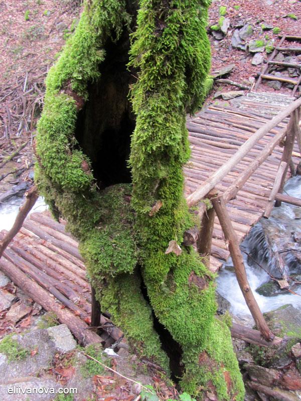 Лешнишки водопад - краят на мостчето