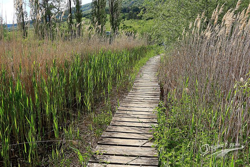 Дървеното мостче – напред към блатото