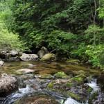 Златните мостове: 6 леки и приятни маршрута на Витоша