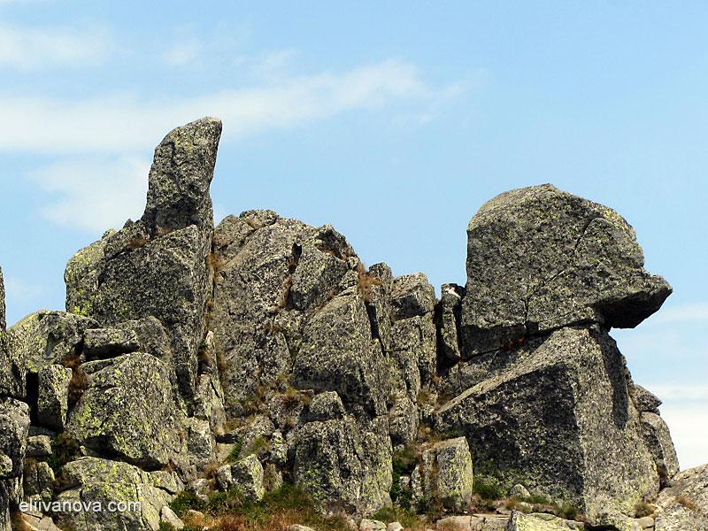 На Черни връх - интересно скално образувание, приличащо на куче