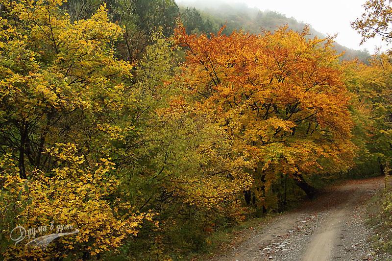 Златна есен над Мирково