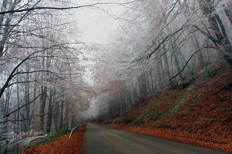 Бело-цветни багри на Петрохан