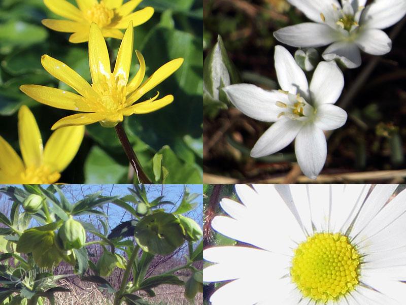Усещане за ранна пролет