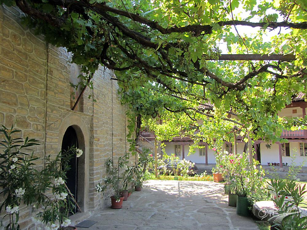 Килифаревски манастир: манастирската лоза