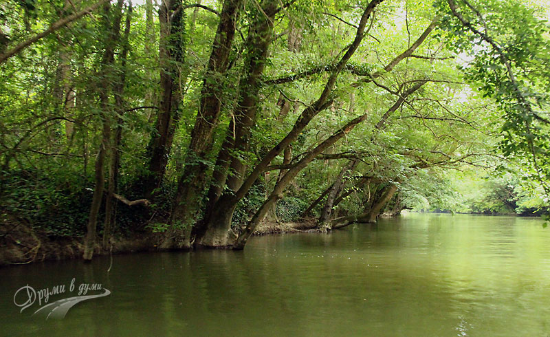 Река Камчия: лонгоз