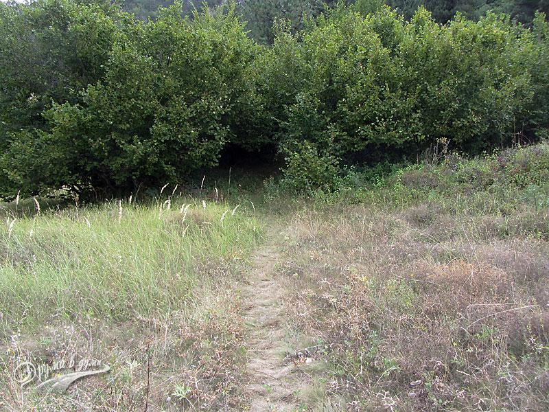 Началото на горската пътека вдясно