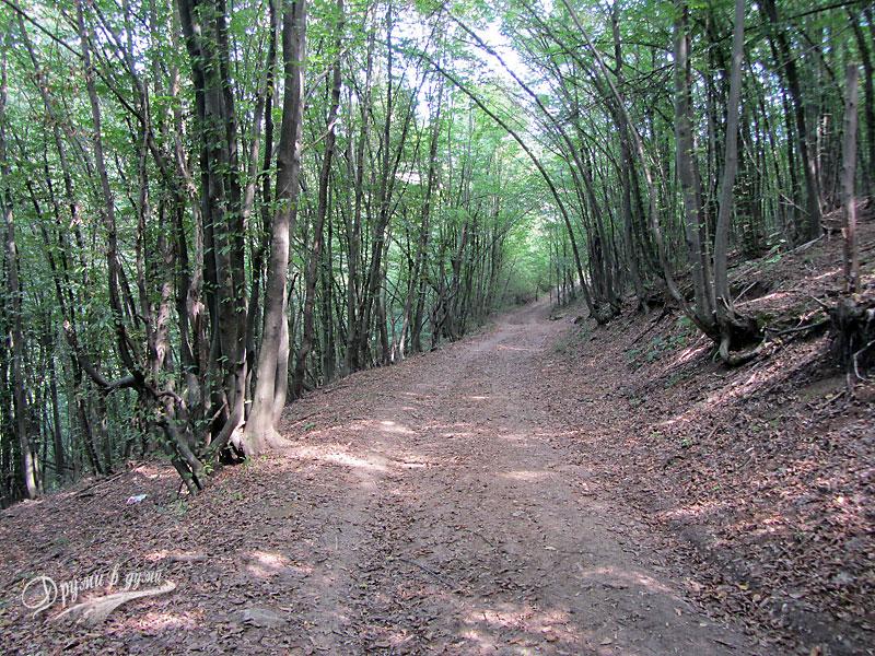 Пътеката през горичката