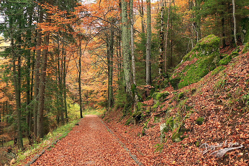 Есенно по витошките пътеки