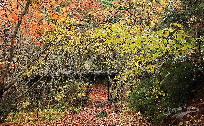 По пътеката: гиздава витошка есен