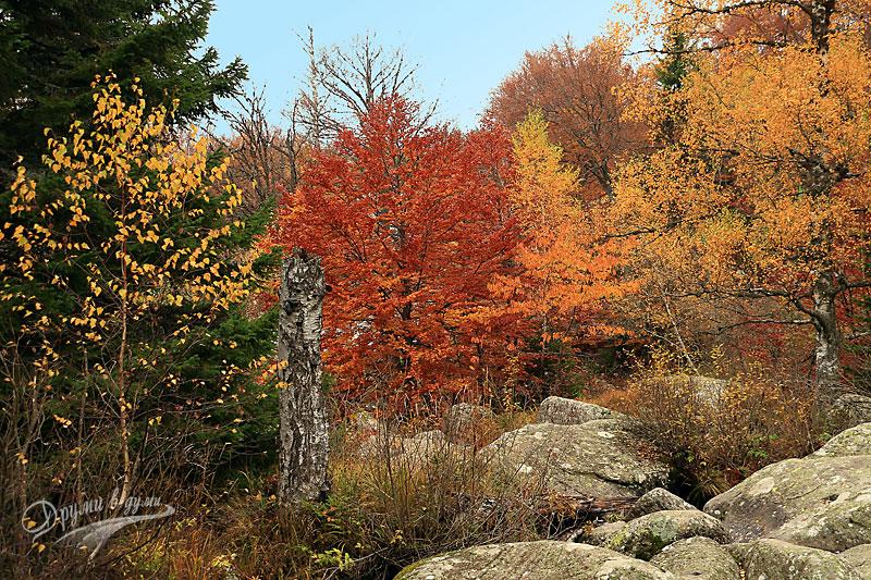 Още есенни гледки на Витоша