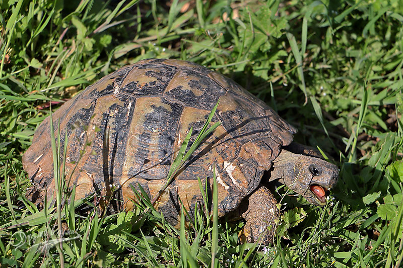 В Центъра за костенурки в Драгоман
