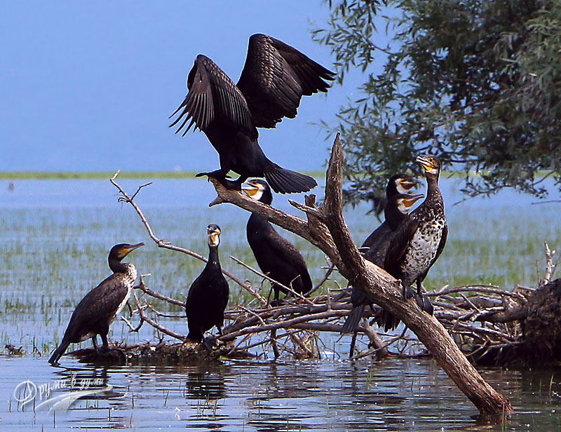 В езерото Керкини: близо до птиците