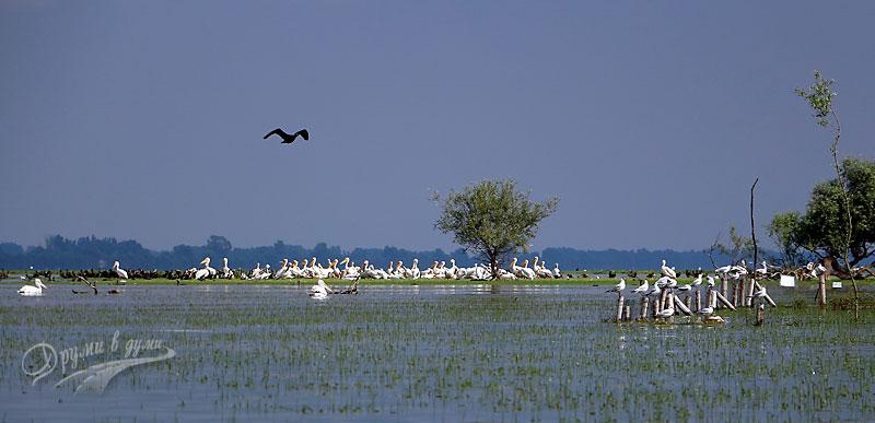Езерото Керкини: пеликаните
