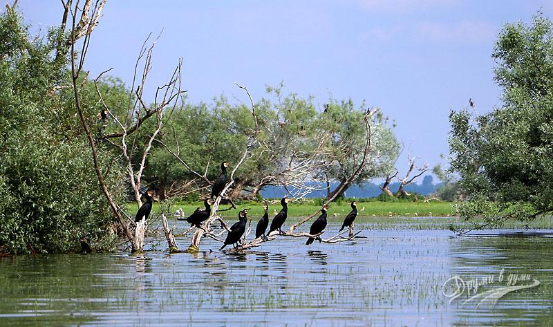 Езерото Керкини: вътре при птиците