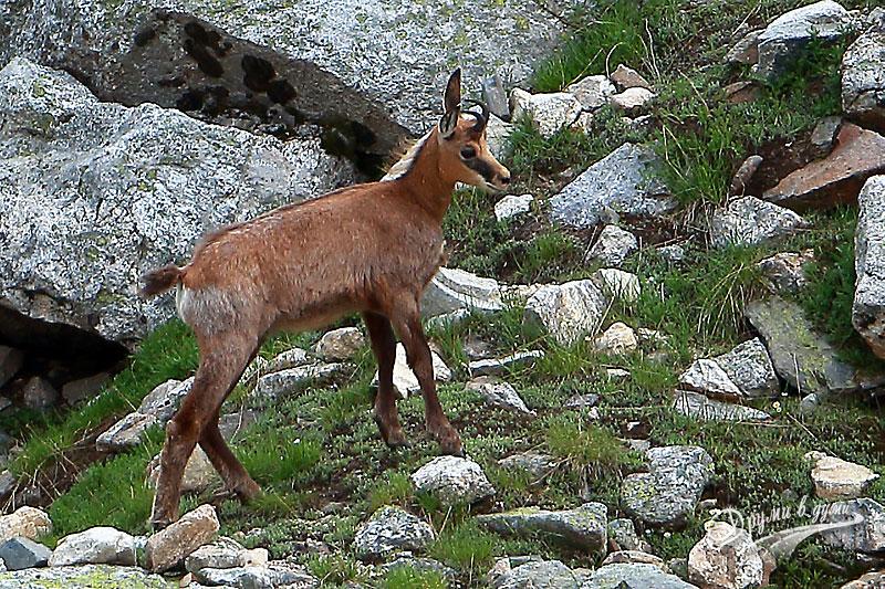 Един специален турист към връх Мальовица