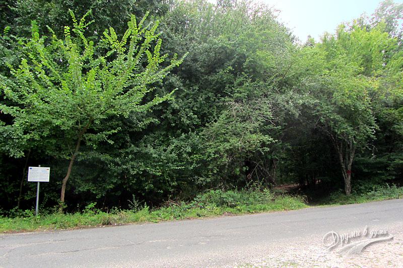 Началото на пътеката към Камъка - вдясно от табелката