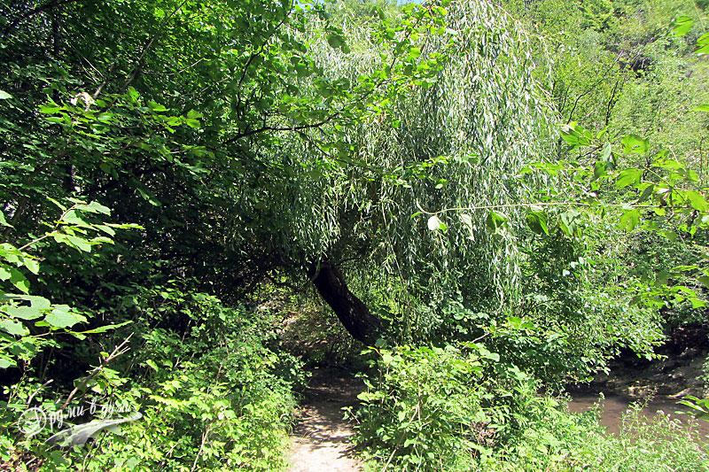 По пътеката към водопад Сини вир