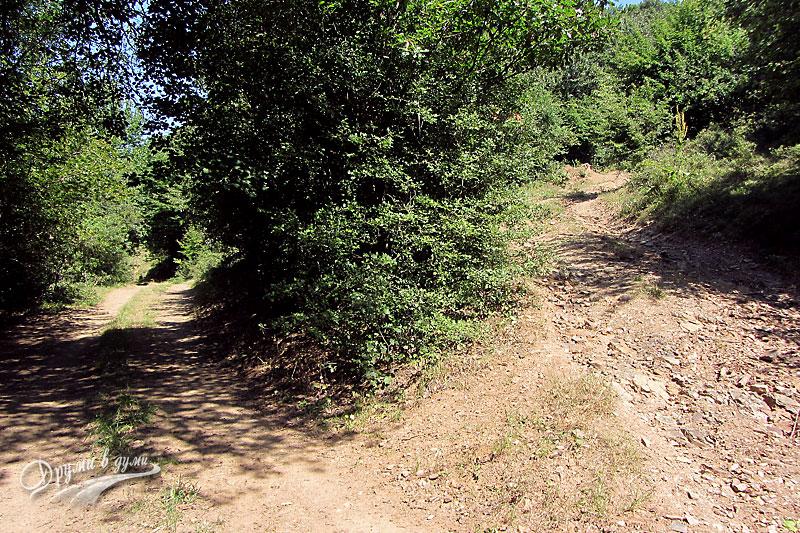 Към връх Мургаш е дясната пътека