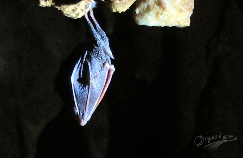 Пещера Венеца: едно прилепче, което ни посрещна