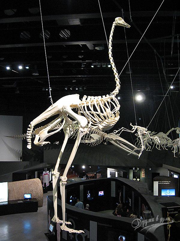 Музеят на науките