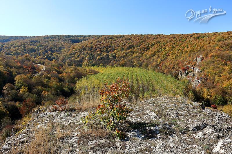 Над скално светилище Баджалията: поглед към района
