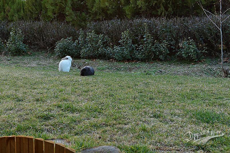 На верандата - тишина, спокойствие, лозе и зайчета