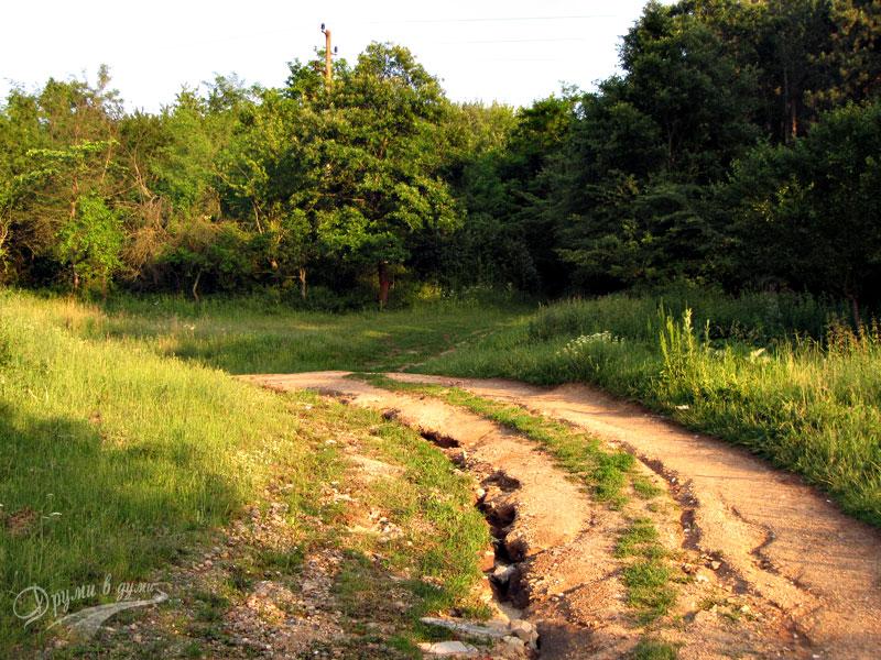 В началото на маршрута - поемате вдясно към горичката