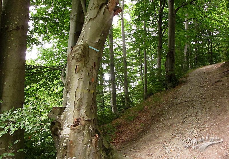 В началото на първото изкачване