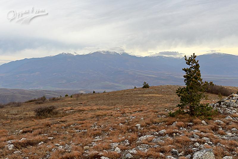 Гледка към Рила от връх Бобошевски Руен