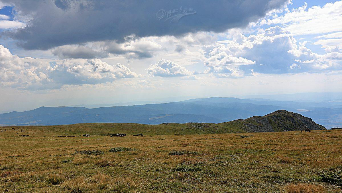 Голямото тревисто плато