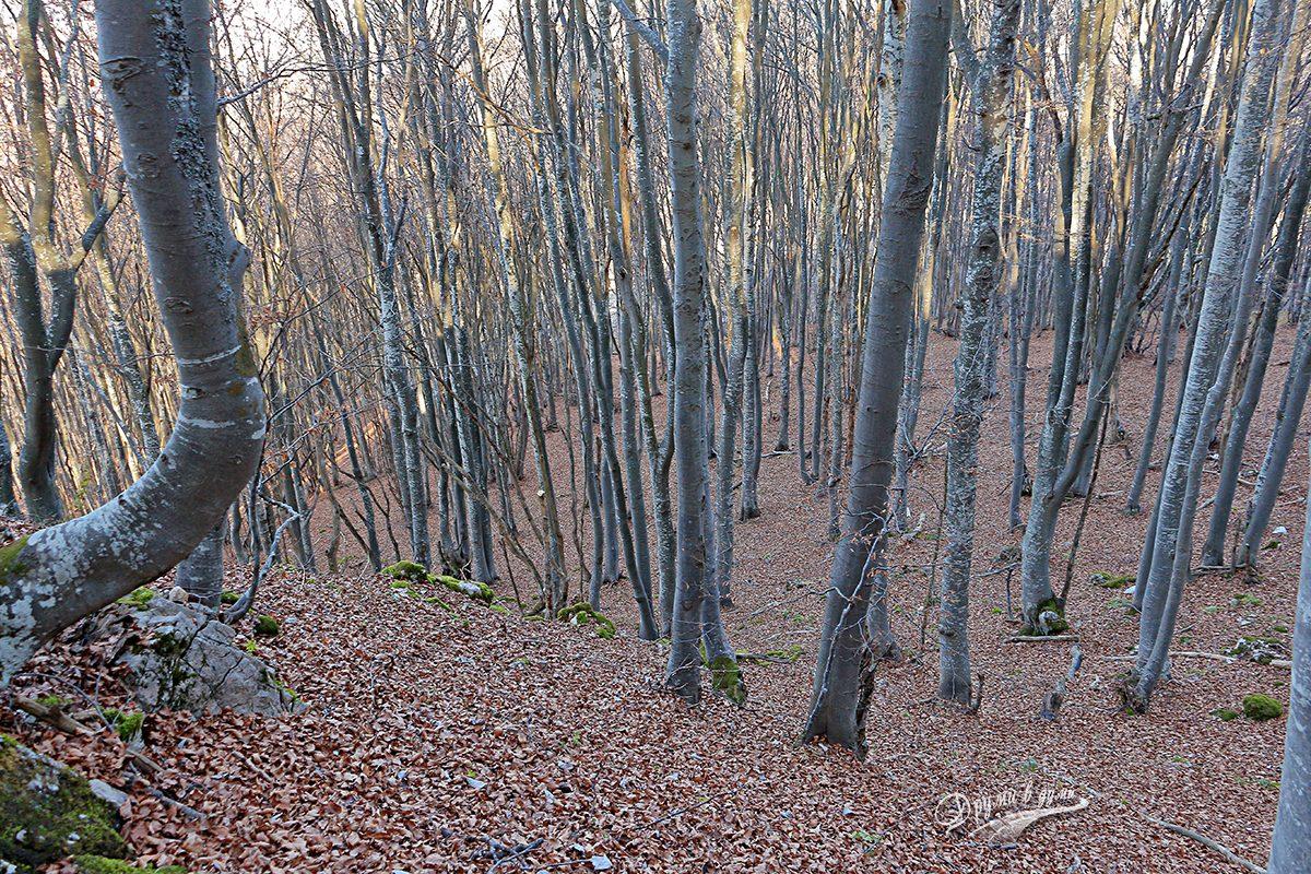 Стръмната част в гората