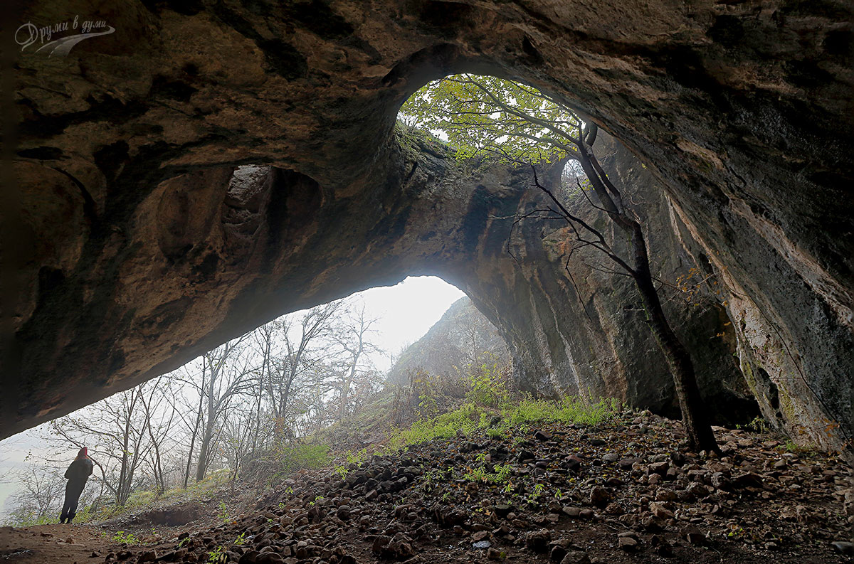 Пещерата с дървото