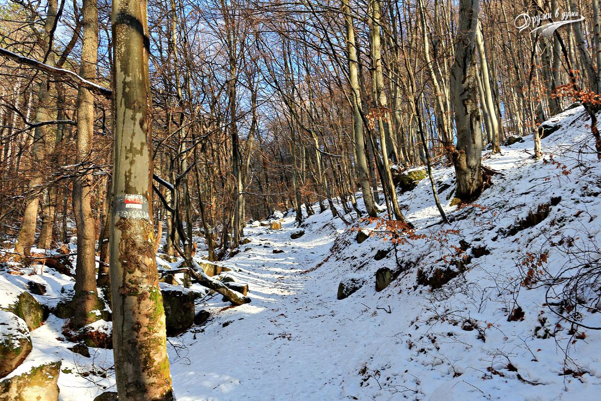 Пътека на здравето край село Кладница
