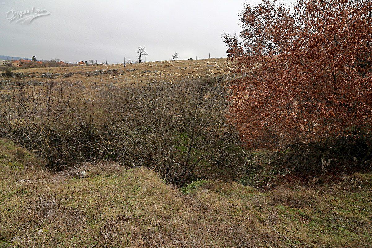Над Пешкето - виждат се клоните на дърветата в лабиринта