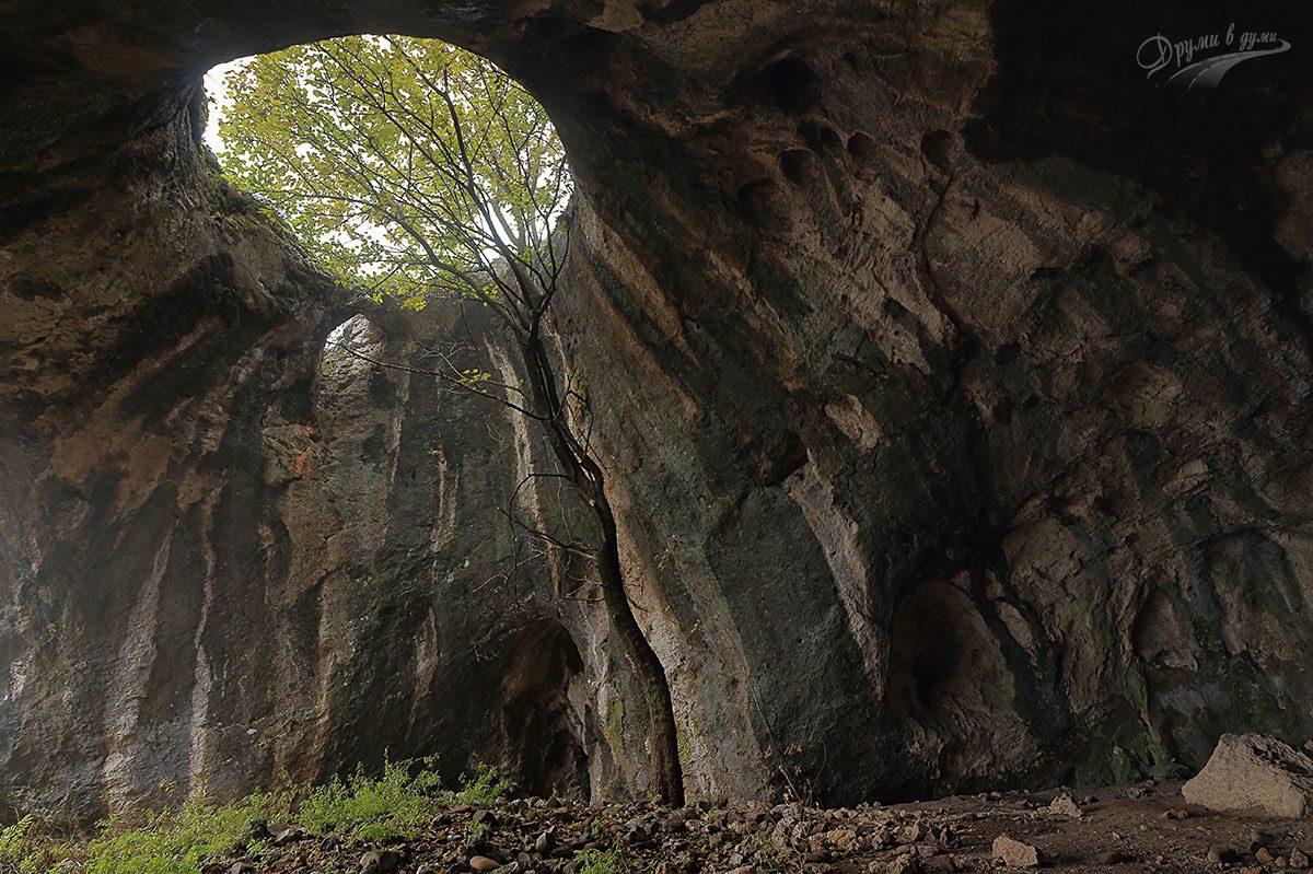 Пещерата с дървото до с. Ботуня