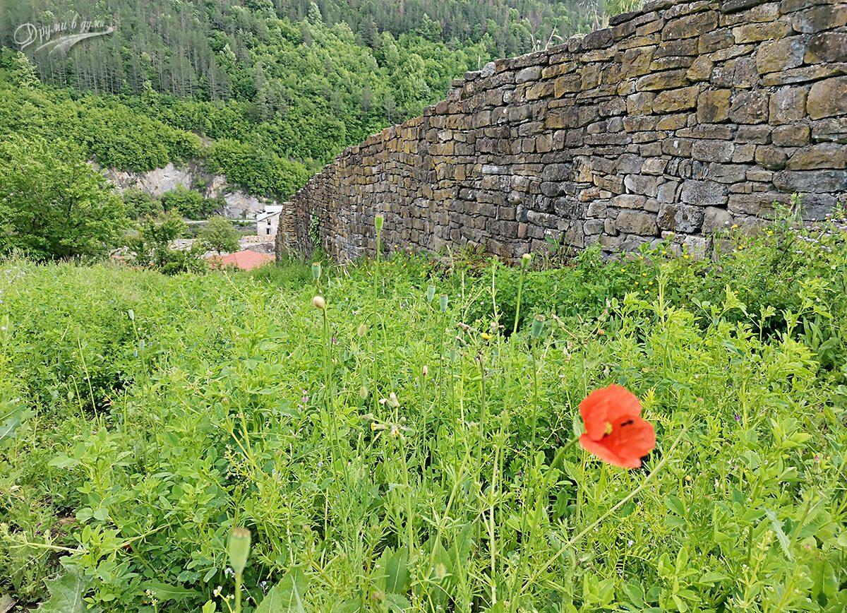 При крепостта в Дебнево в сезона на маковете