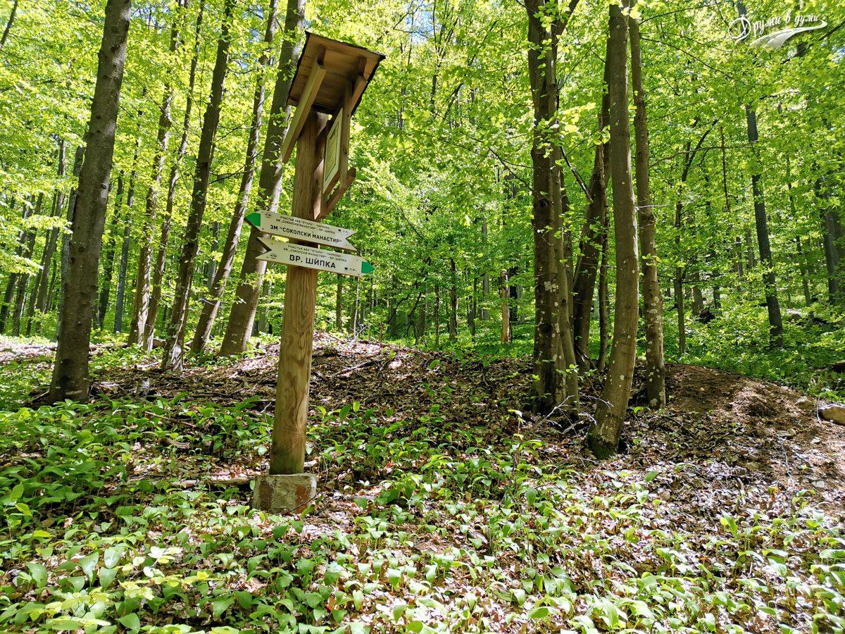 В гората по маршрута