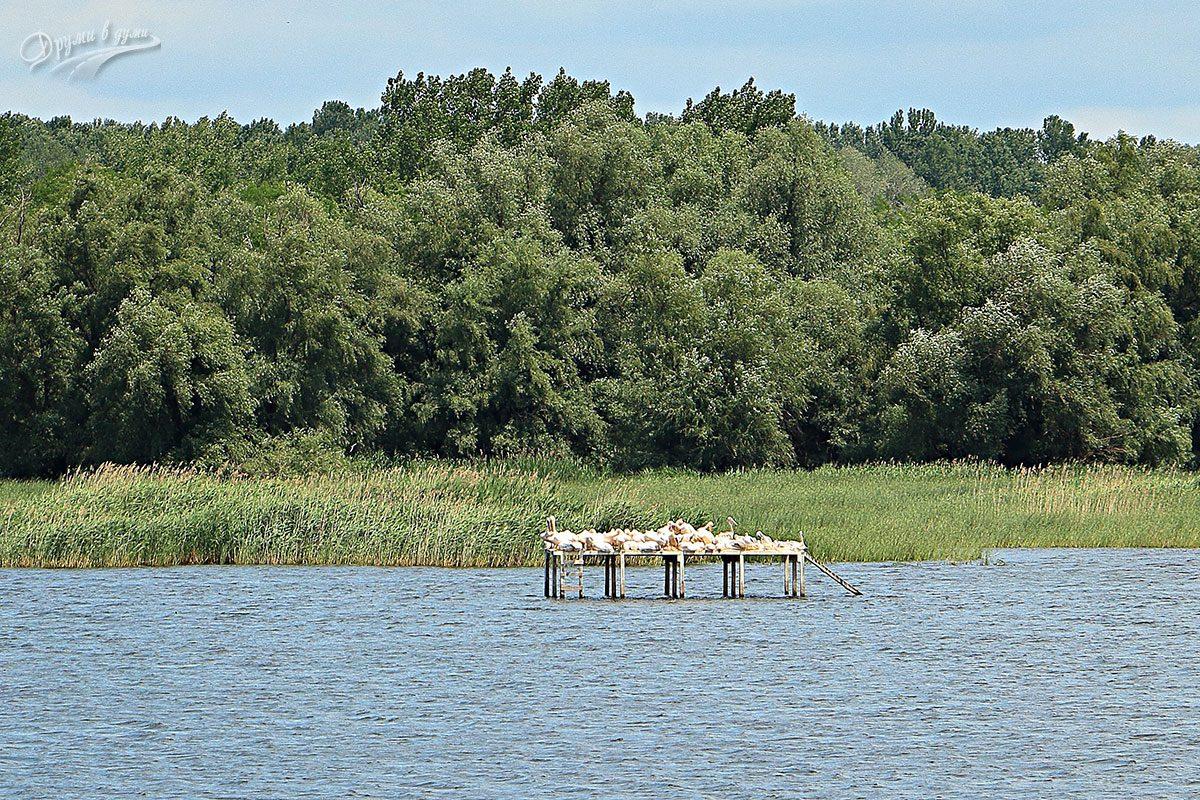 Остров Персин и пеликаните