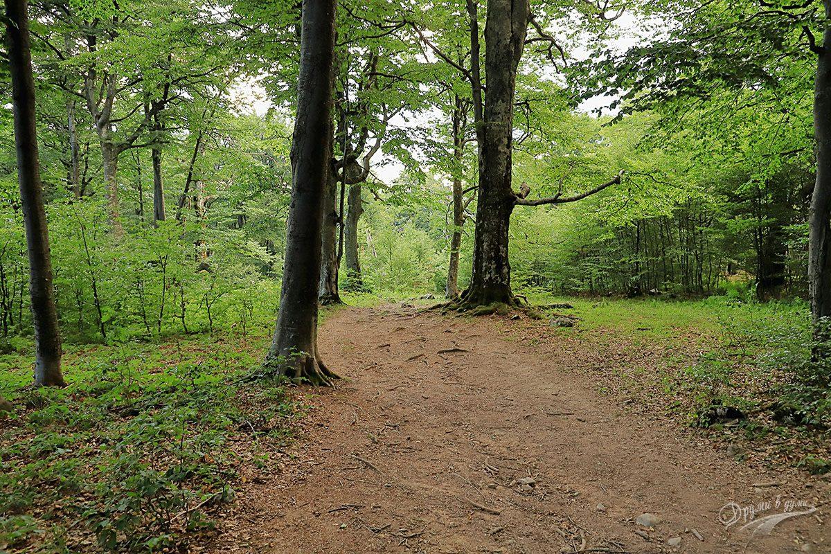По пътеката през гората
